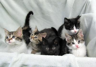 Madonna's kittens
