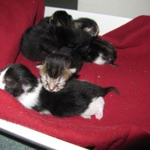 Madge's kittens
